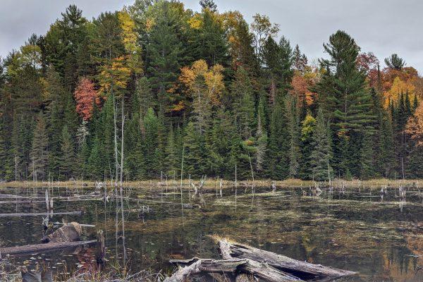 Comment profiter de l'automne, par temps de pandémie?